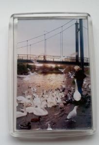 Swan Fridge Magnet - feeding the birds
