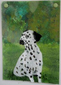 Dalmatian Dog Dotty