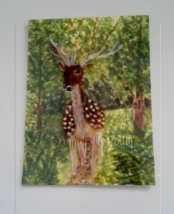Deer ACEO w