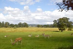 Deer Park w