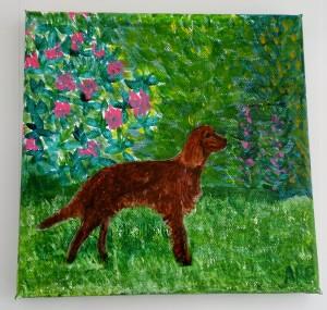 Irish Red Setter Dog w