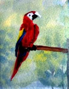 Macaw w