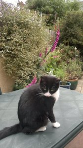 Lottie on the garden table
