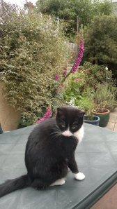 Lottie on the garden table