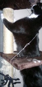 Lottie scratching post