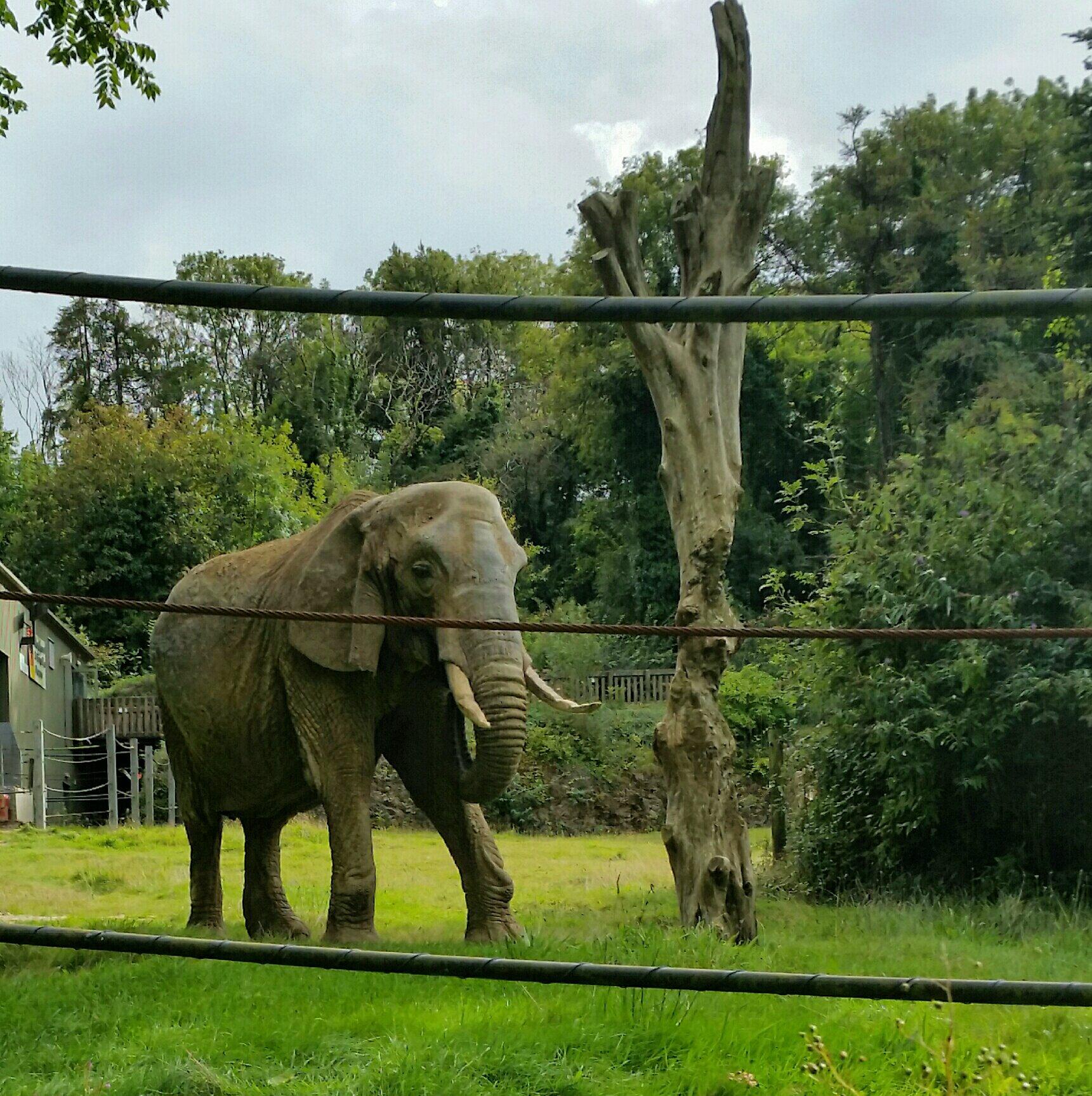 An elephant photograph for December 4th online advent calendar