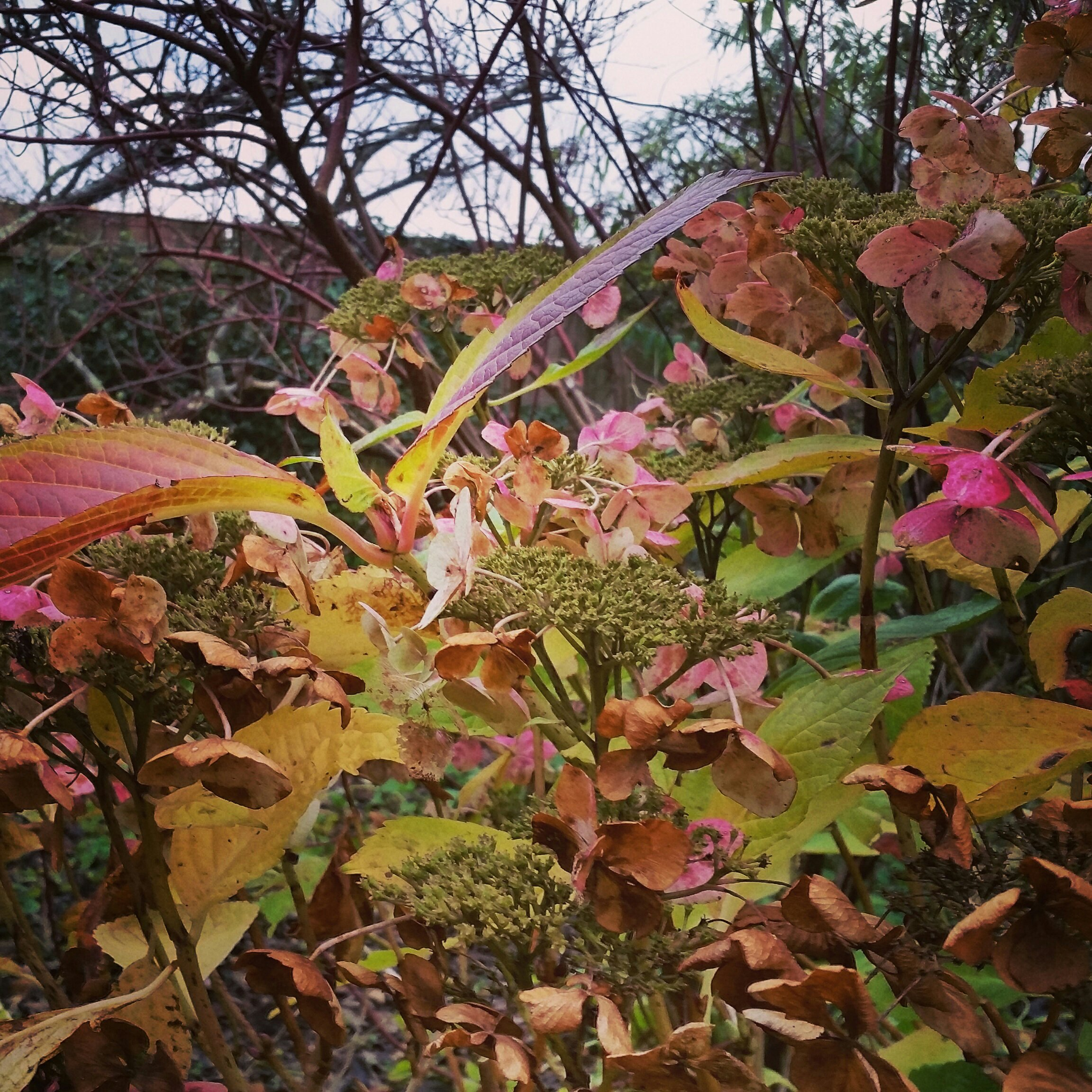 Goodbye Autumn photo with a Hydrangea and bear twigs behind